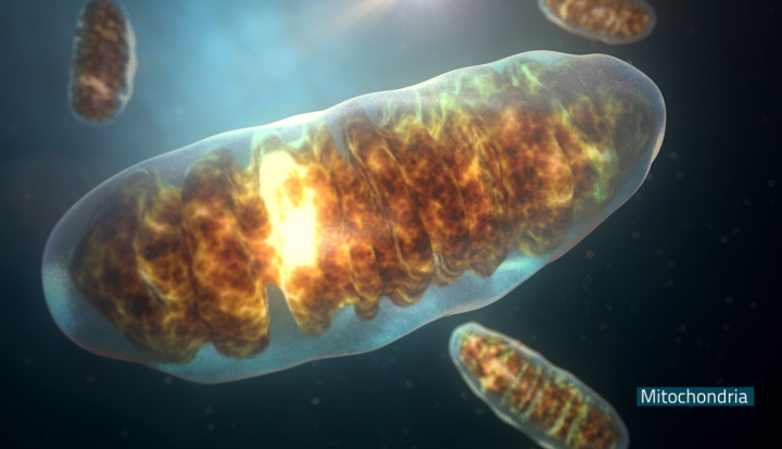Mitocondria_style_sample