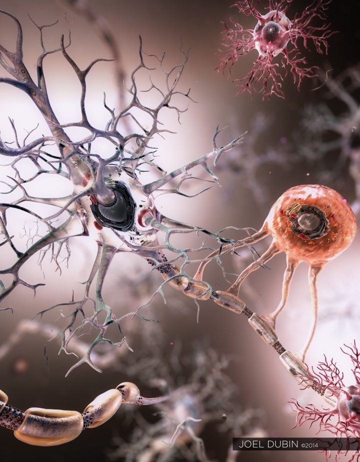 Neuron_oligo_joel