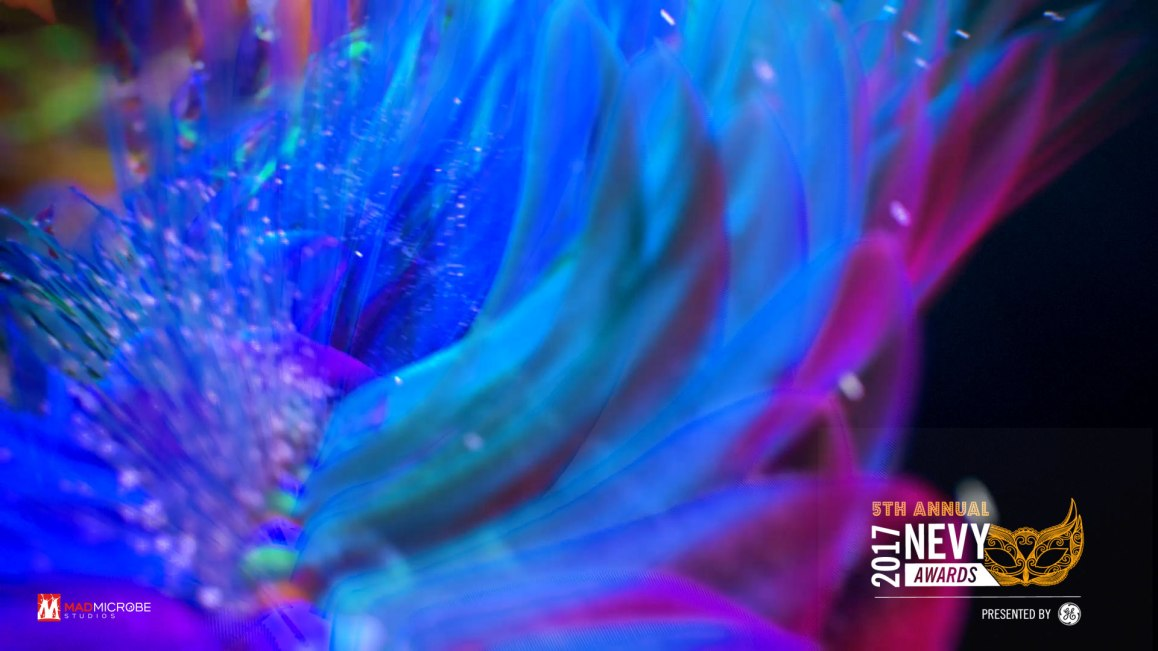 tech_feathers_01 (00340)